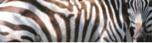 www.safariFAQS.com