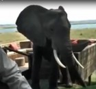 Elephant gatecrashes dinner